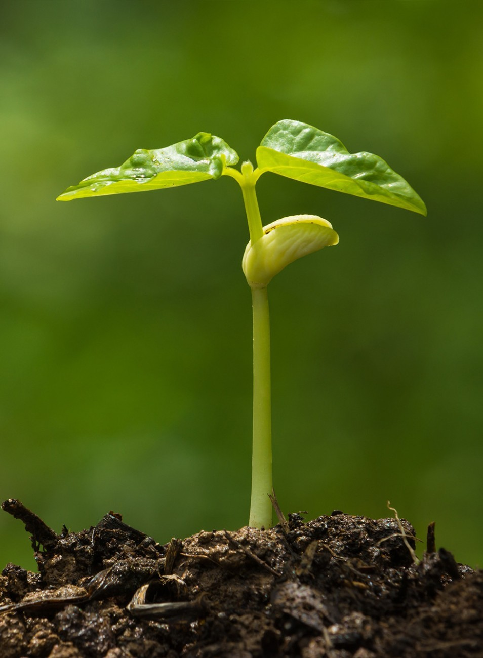 Seed Growing Plant